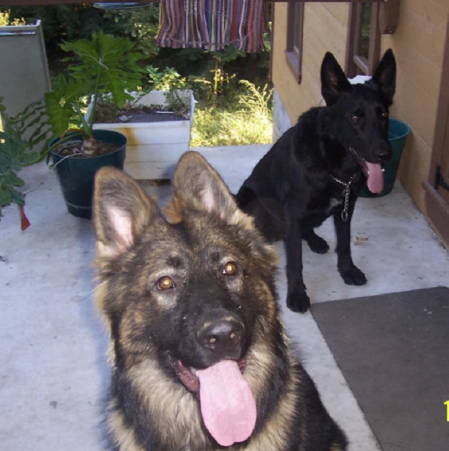 Mike and Jackies pupps Babe and Lazarus
